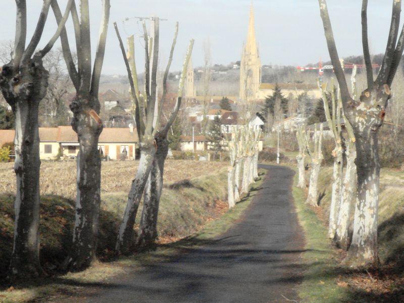 Elagage chemin chapelle 001