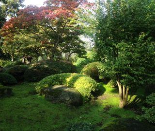 Jardin japonais 2 comp