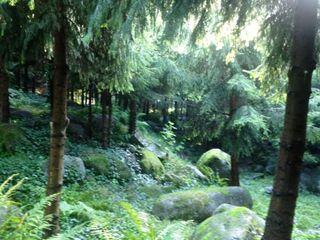 Forêt vosgienne comp