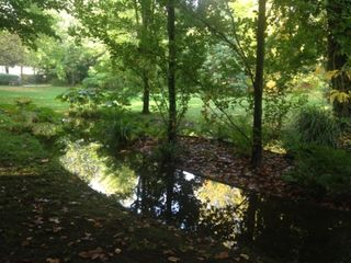 Jardin anglais comp