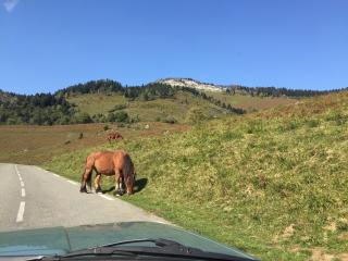 Col de Marie Blanque 2 cheval